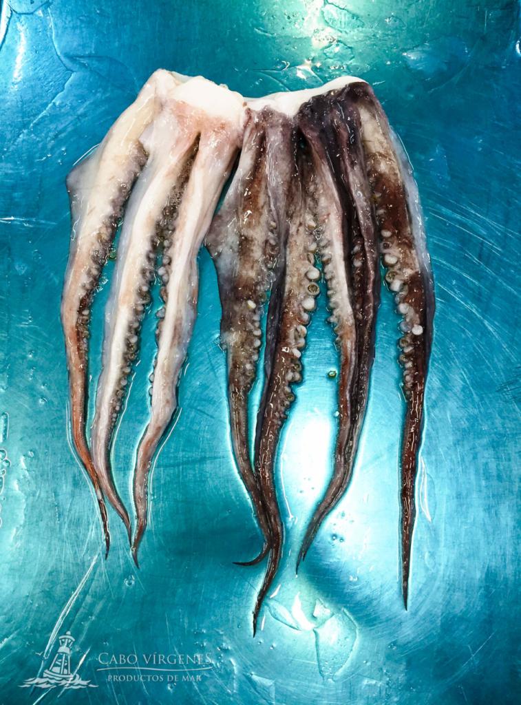 tentáculos pota de Perú