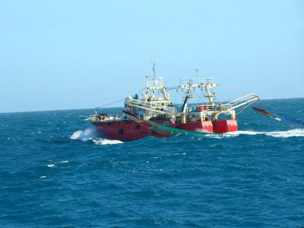 Nuestra flota de barcos congeladores.