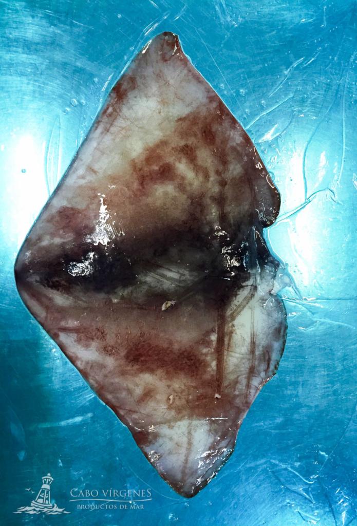 Cabo Vírgenes peruvian squid