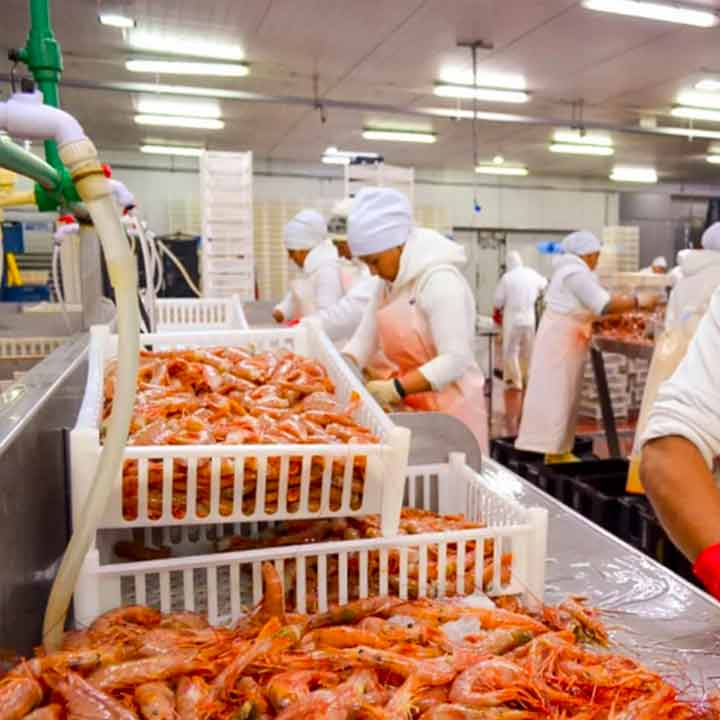planta comodoro rivadavia cabo virgenes red shrimp
